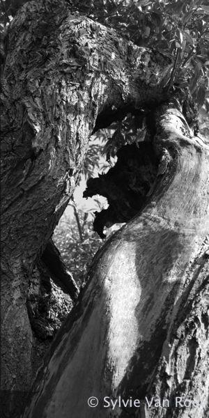 Trees07
