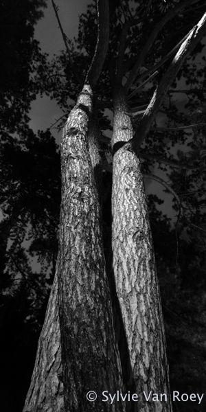 Trees09