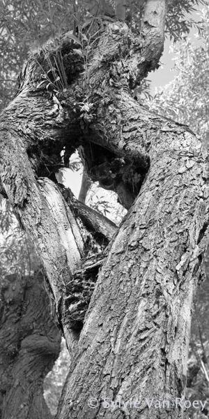 Trees10