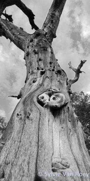 Trees18