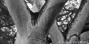 Trees13