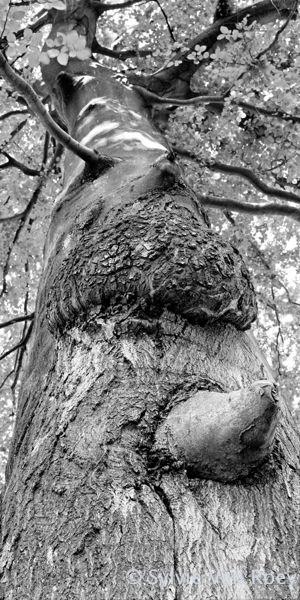 Trees27