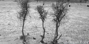 Trees25