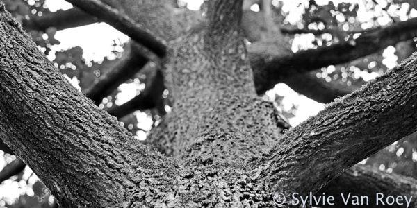 Trees29