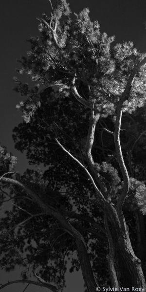 Trees32