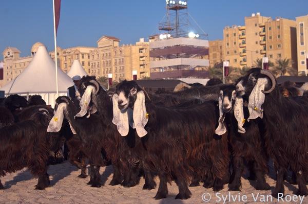 Qatar Culture &Tradition 25
