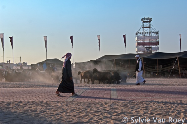 Qatar Culture &Tradition 26
