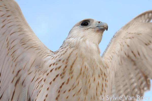 Falcon09