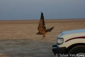 Falcon10