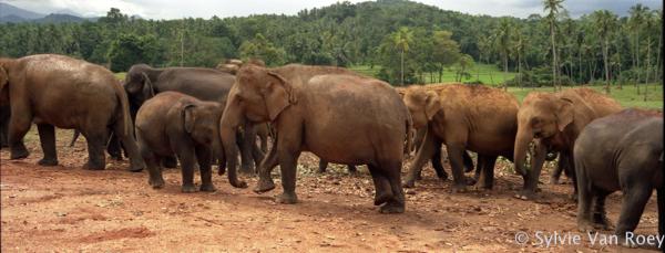 SrilankaPano02