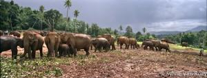 SrilankaPano03