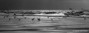 North Sea B&W 06