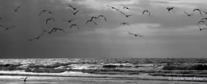 North Sea B&W 07