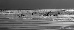 North Sea B&W 13