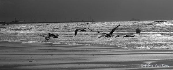 North Sea B&W 13