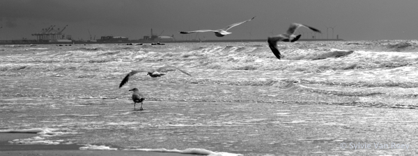 North Sea B&W 14