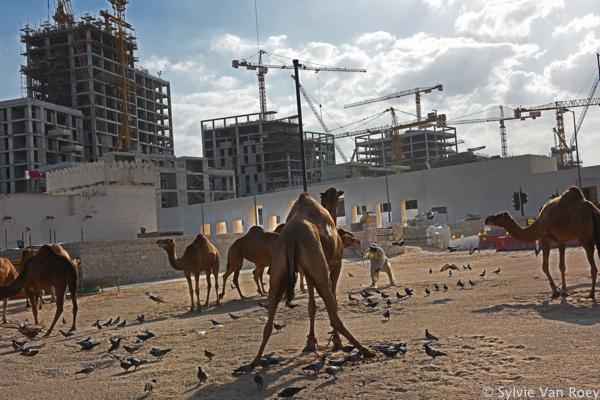 Qatar Souq Waqif 14