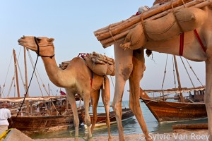 Dhows2