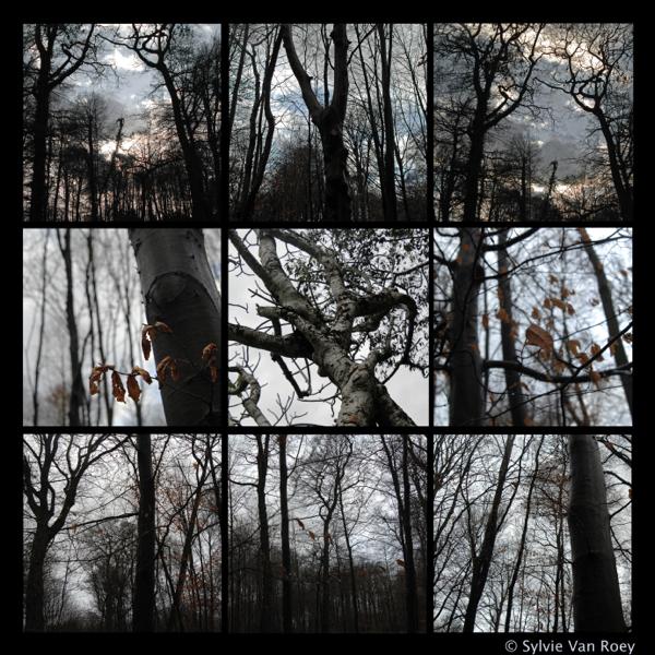 Four Elements 09